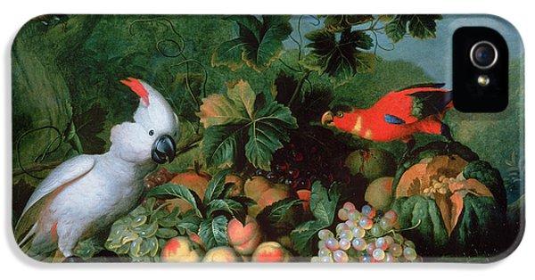 Cockatoo iPhone 5 Case - Fruit And Birds by Jakob Bogdani or Bogdany