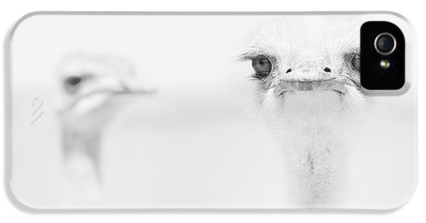 Funny Ostrich IPhone 5 Case