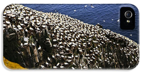 Gannets At Cape St. Mary's Ecological Bird Sanctuary IPhone 5 Case by Elena Elisseeva