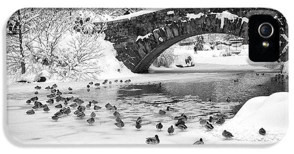 Gapstow Bridge In Snow IPhone 5 Case by Dave Beckerman