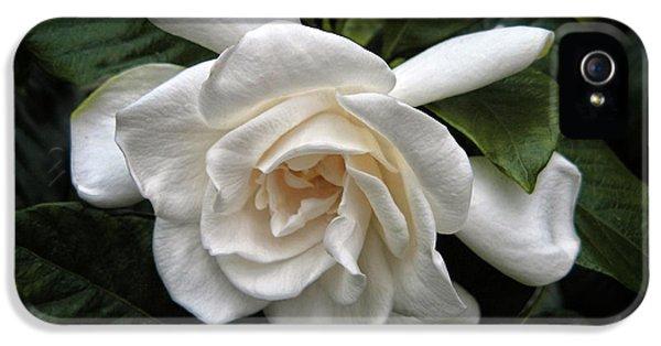 Gardenia IPhone 5 Case by Jessica Jenney