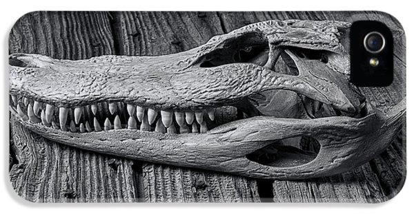 Gator Black And White IPhone 5 Case