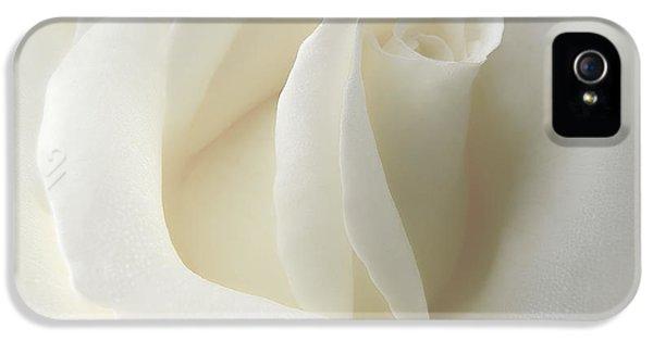 Gentle White Rose Flower IPhone 5 Case by Jennie Marie Schell