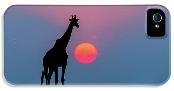Giraffe At Sunset Chobe Np Botswana IPhone 5 / 5s Case by Andrew Schoeman