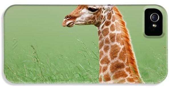 Giraffe Lying In Grass IPhone 5 / 5s Case by Johan Swanepoel