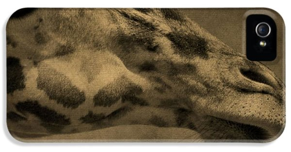 Giraffe Portait IPhone 5 / 5s Case by Dan Sproul