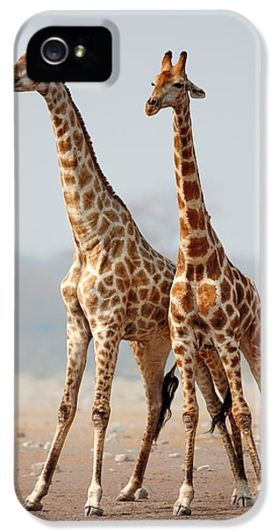 Giraffes Standing Together IPhone 5 Case by Johan Swanepoel