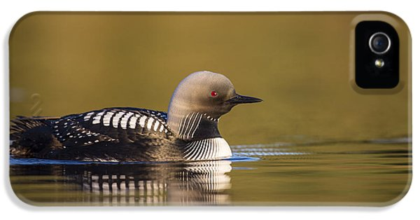 Glassy Waters And A Pacific Loon IPhone 5 Case by Tim Grams