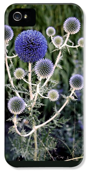 Globe Thistle IPhone 5 Case by Rona Black