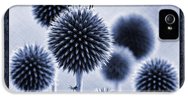 Globe Thistles IPhone 5 Case by Tim Gainey