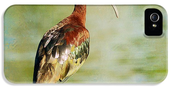 Glossy Ibis IPhone 5 Case by Fraida Gutovich