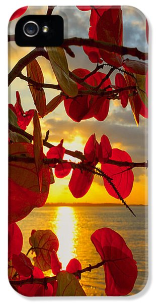Glowing Red IPhone 5 Case by Stephen Anderson
