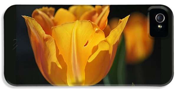 Glowing Tulips IPhone 5 / 5s Case by Rona Black