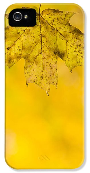 IPhone 5 Case featuring the photograph Golden Autumn by Sebastian Musial