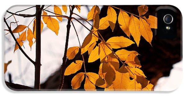 Golden Beech Leaves IPhone 5 Case
