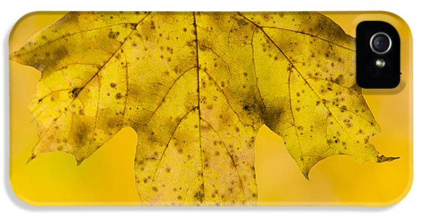 IPhone 5 Case featuring the photograph Golden Maple Leaf by Sebastian Musial