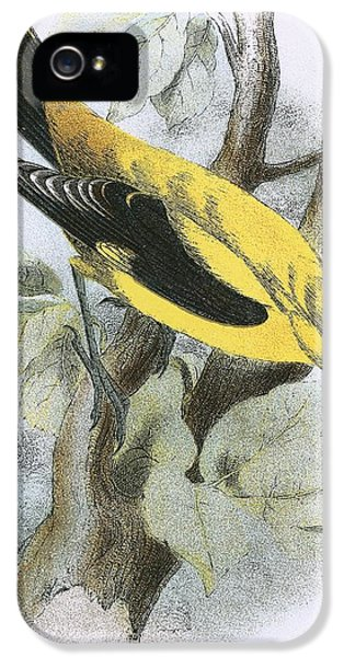 Golden Oriole IPhone 5 / 5s Case by English School