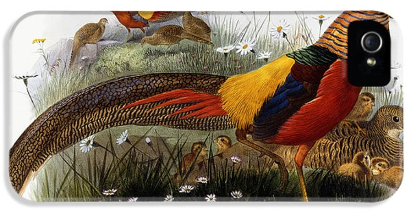 Golden Pheasants IPhone 5 Case by Joseph Wolf