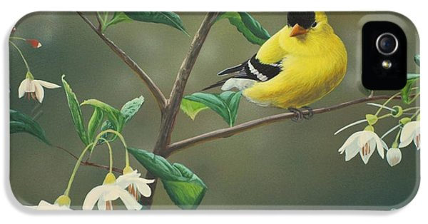 Finch iPhone 5 Case - Goldfinch And Snowbells by Peter Mathios