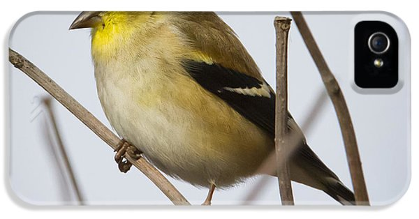 IPhone 5 Case featuring the photograph Goldfinch In It's Winter Coat by Ricky L Jones