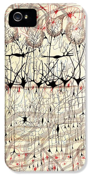 Golgi Olfactory Bulb Of Dog IPhone 5 Case