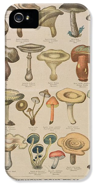Good And Bad Mushrooms IPhone 5 Case by French School