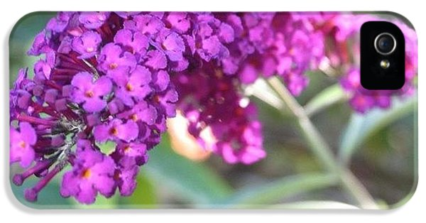 Edit iPhone 5 Case - Good Morning Purple Butterfly Bush by Anna Porter