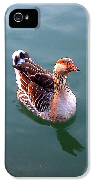 Goose IPhone 5 Case