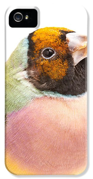 Gouldian Finch Erythrura Gouldiae IPhone 5 Case by David Kenny