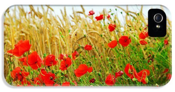 Grain And Poppy Field IPhone 5 Case by Elena Elisseeva