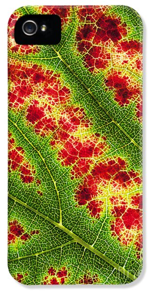 Grape Leaf Pattern IPhone 5 Case by Tim Gainey
