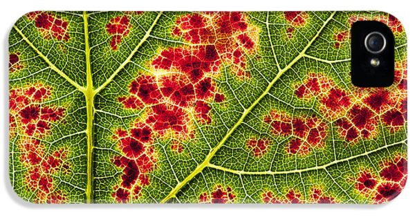 Grape Leaf Texture IPhone 5 Case by Tim Gainey