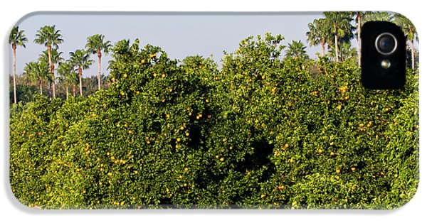 Grapefruit iPhone 5 Case - Grapefruit Grove In Mission, Texas by Larry Ditto
