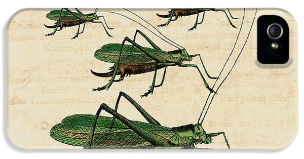 Grasshopper Parade IPhone 5 / 5s Case by Antique Images