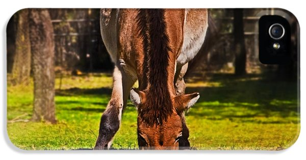 Grazing With An Attitude IPhone 5 Case