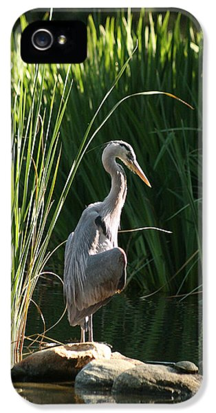 Great Blue Heron IPhone 5 Case by Ellen Henneke
