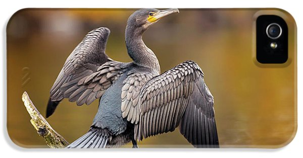 Great Cormorant Drying Its Wings IPhone 5 Case by Simon Booth