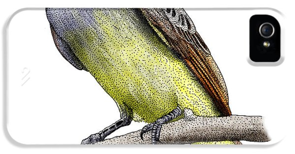 Great Crested Flycatcher IPhone 5 Case by Roger Hall