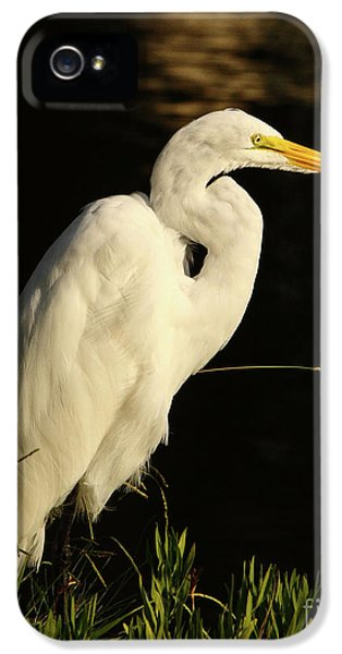 Great Egret At Morning IPhone 5 Case by Robert Frederick