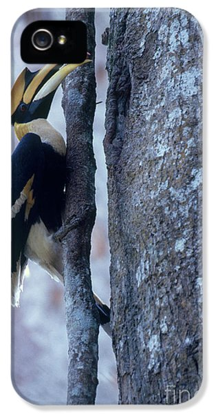 Great Hornbill IPhone 5 / 5s Case by Art Wolfe