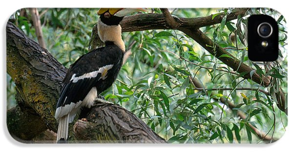 Great Indian Hornbill IPhone 5 / 5s Case by Art Wolfe
