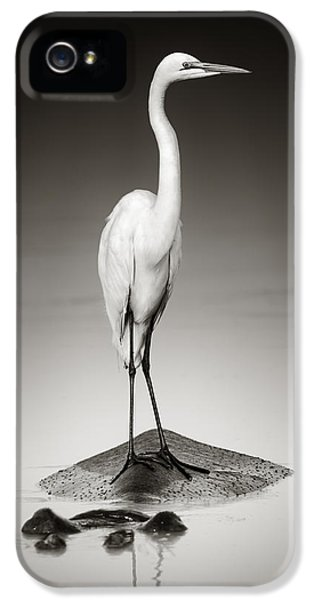 Great White Egret On Hippo IPhone 5 Case