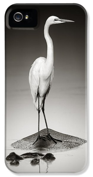 Great White Egret On Hippo IPhone 5 Case by Johan Swanepoel