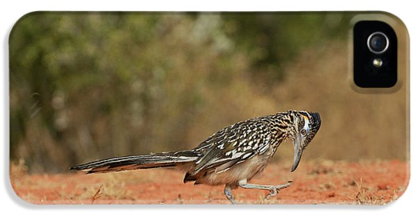 Roadrunner iPhone 5 Case - Greater Roadrunner (geococcyx by Rolf Nussbaumer