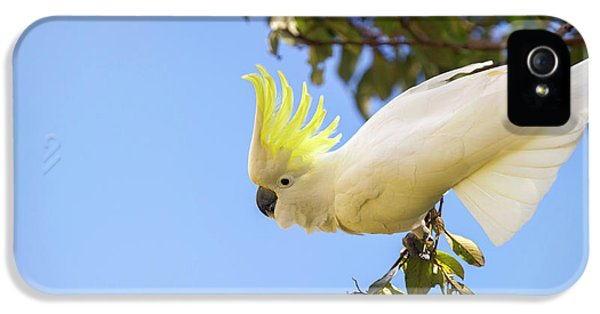 Cockatoo iPhone 5 Case - Greater Sulphur-crested Cockatoo by Louise Murray