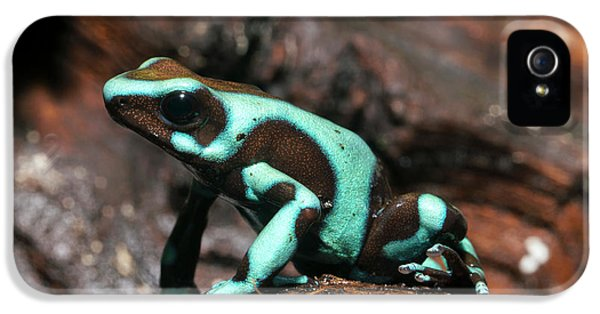 Green And Black Poison Dart Frog IPhone 5 Case