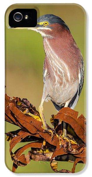 Green Heron IPhone 5 Case