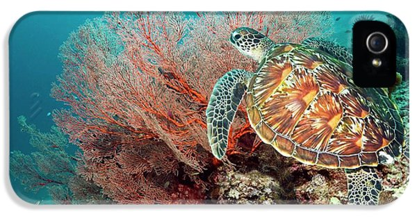 Green Sea Turtle And Gorgonian IPhone 5 Case by Georgette Douwma