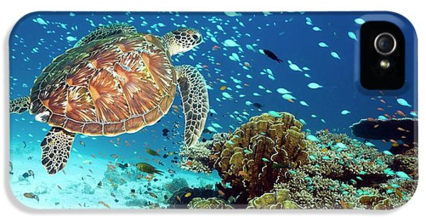 Green Sea Turtle And Reef Fish IPhone 5 Case by Georgette Douwma