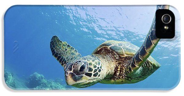 Turtle iPhone 5 Case - Green Sea Turtle - Maui by M Swiet Productions